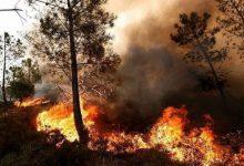 آتش سوزی در جنگل ها